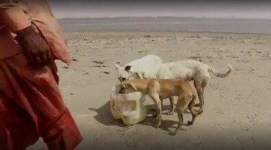개들의 섬을 돌보는 수호자