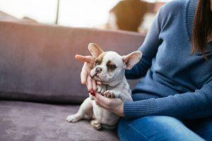 개가 주인을 볼 때, 뇌에서는 무슨 일이 일어날까?