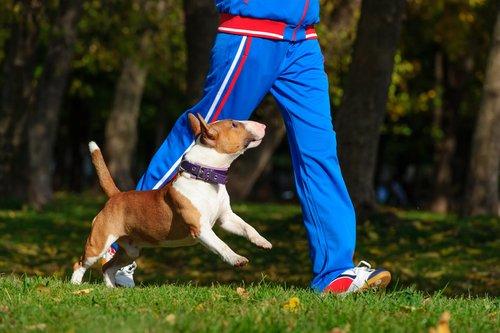 개와 산책하기