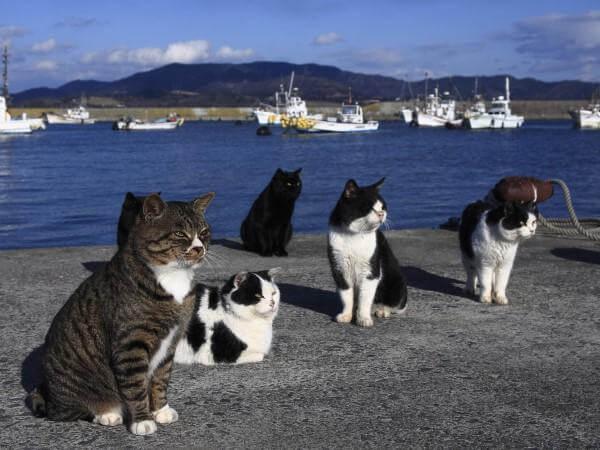 고양이 섬에 대한 이야기