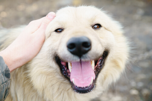 개를 사랑하는 10가지 이유