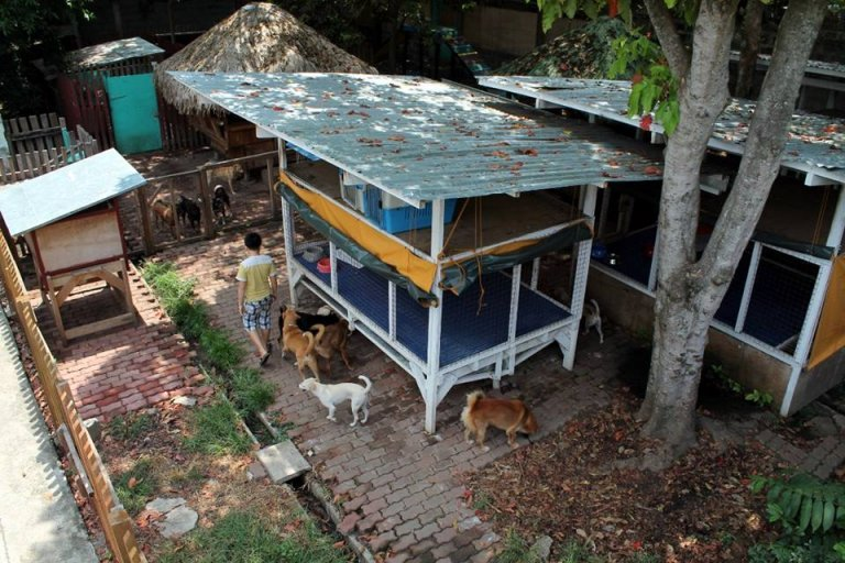 동물 보호소를 지은 필리핀 소년 켄