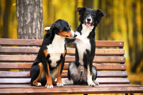 개들은 왜 서로의 냄새를 맡을까?