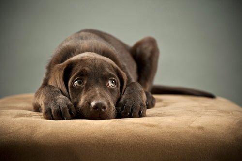 친구 강아지를 잃은 슬픔을 극복하도록 도와주는 방법