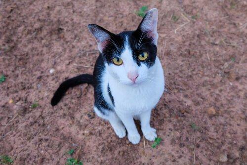 일 년 동안 주인을 기다리는 버림받은 고양이