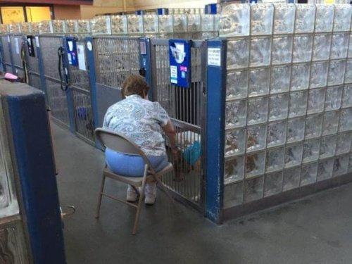 유기견 보호소에서 개들에게 책을 읽어주는 사람