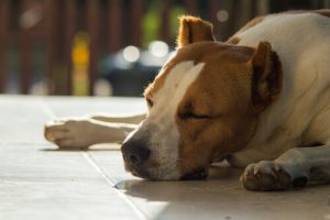개가 구토하는 원인과 대책