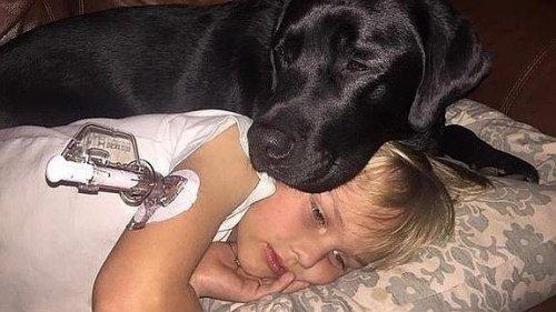 반려동물과 아이