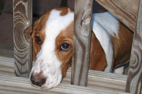 개가 겁을 먹었다는 6가지 신호: 개의 신호에 공감하는 방법
