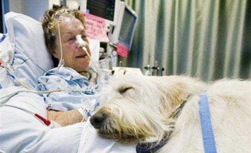 반려동물의 출입이 가능한 캐나다의 병원