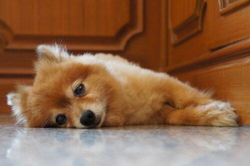 밤중에 울부짖는 강아지를 조용히 시키는 방법