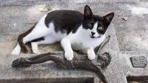 매일 주인의 무덤을 찾는 고양이