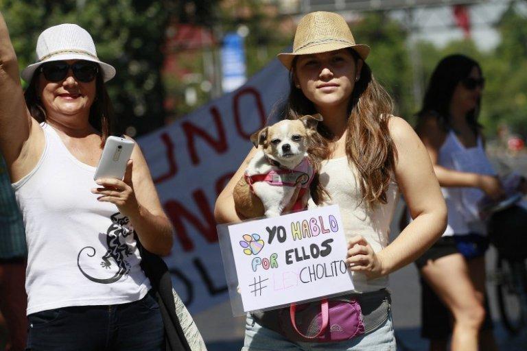 동물학대 반대 운동, 인터넷에서 거리로