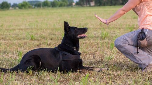 강아지로부터 존중 받는 방법