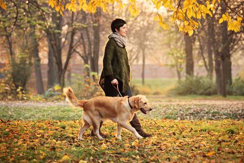 개와 산책