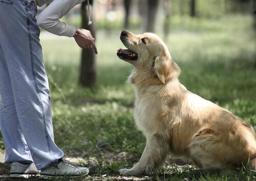 왜 강아지가 주인을 존중해야 할까