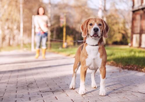 강아지에게 존중받는 법