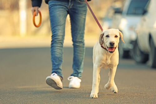 산책하는 개