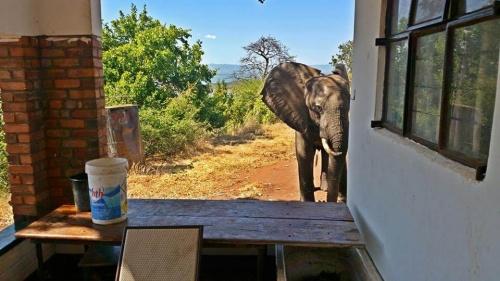 밀렵꾼의 총을 피해 사람에게 도움을 청한 코끼리