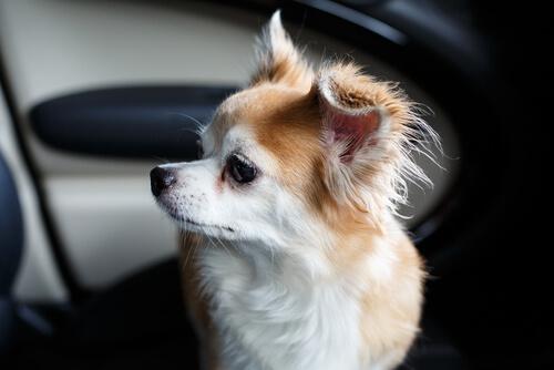 개를 구하기 위해 BMW 차량 유리를 깬 사람