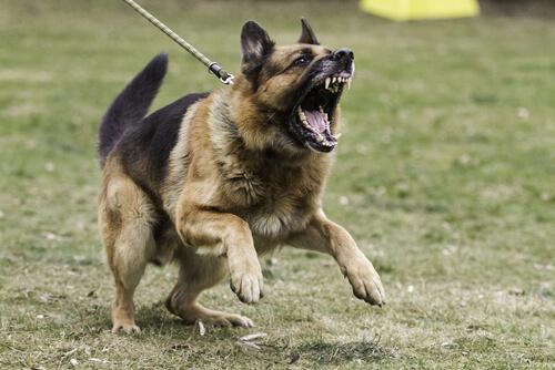 개가 공격적일 때