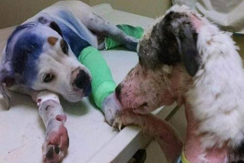 학대받고 버려진 개들의 우정