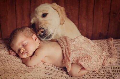 아기의 출생에 대하여 반려견을 준비시키는 방법 6가지