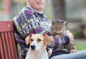 노인과 함께 있는_개와_고양이