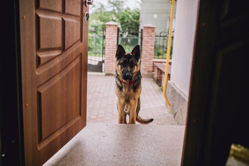 방문객들에게 예의 없는 동물들을 위한 7가지 팁