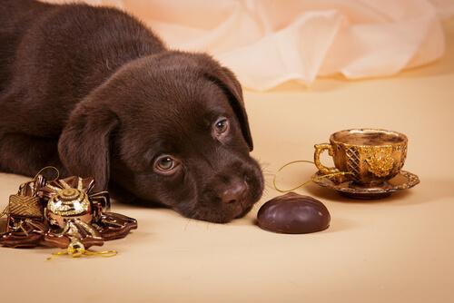 어떤 음식이 개에게 해로울까?