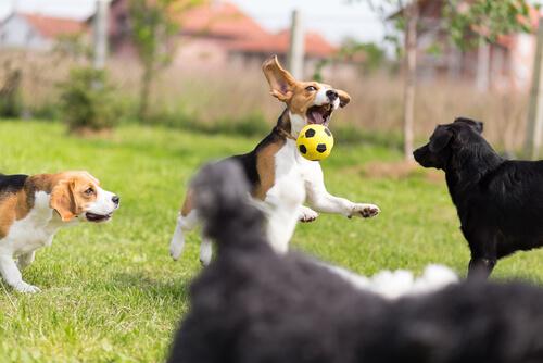 강아지의 놀이
