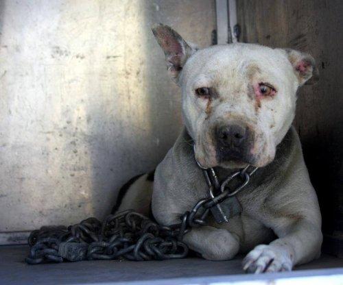2년간 쇠사슬에 묶여 있다가 사랑을 찾게 된 개