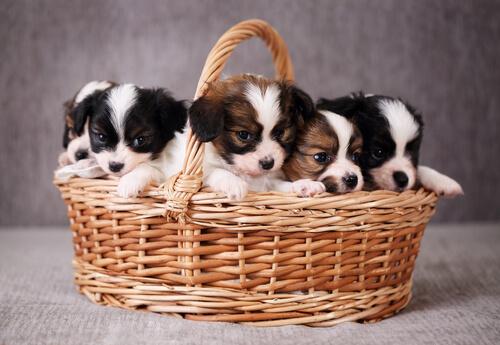 장바구니의 강아지들