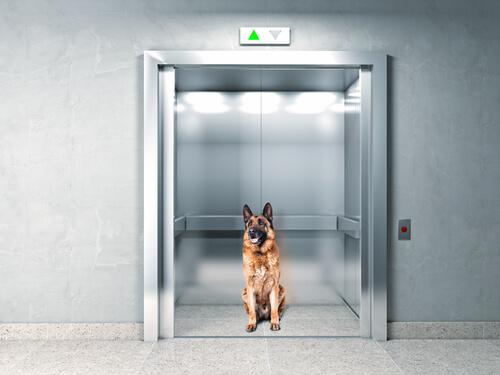 개의 지능: 엘리베이터에 갇혔을 때 개의 반응
