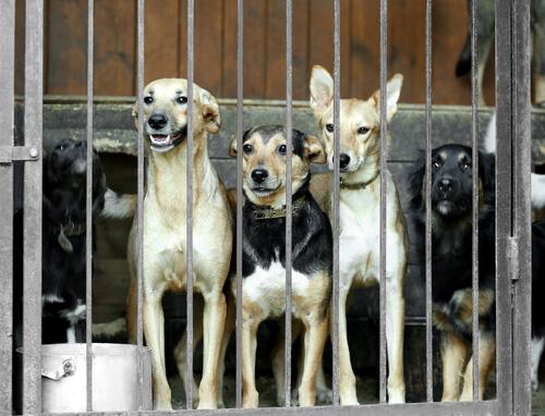 한국이 가장 큰 개고기 시장을 폐쇄했다