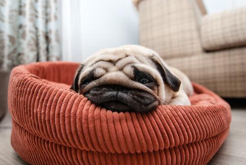 개는 왜 하루 종일 잠을 잘까?