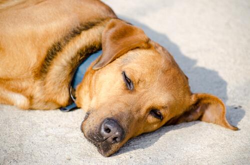 개가 일광욕을 좋아하는 이유는 무엇일까?