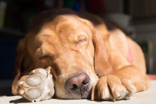 개의 수면 자세는 왜 다를까?