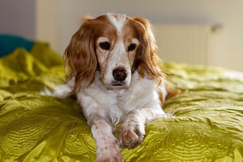 개가 당신의 사타구니 냄새를 맡는 이유는 무엇일까?