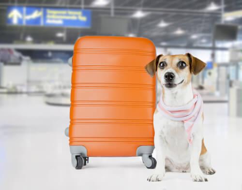 개가 화물칸에 타면 벌어질 수 있는 위험한 상황들