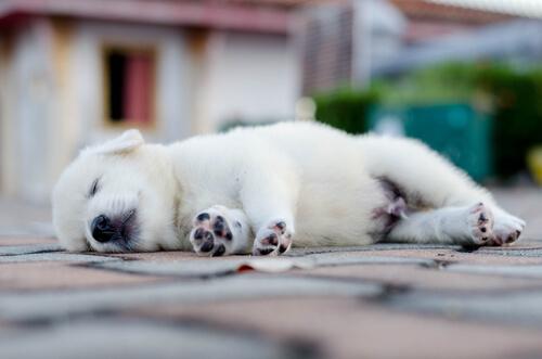 강아지가 자는 모습이 알려주는 것들