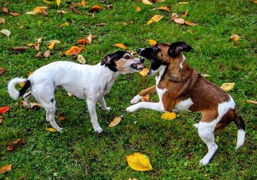 개들의 싸움은 어떻게 말릴 수 있을까?