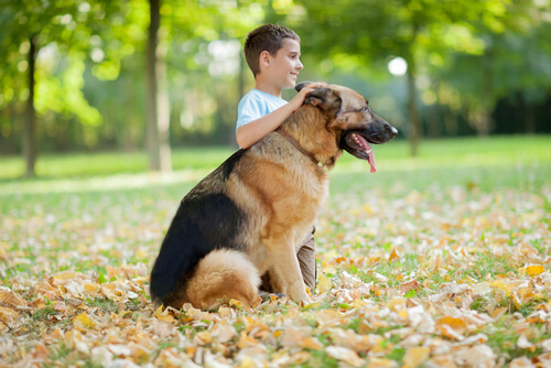 가장 애정이 넘치는 개는 어떤 품종일까?