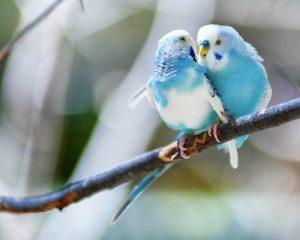 앵무새를 돌보는 방법