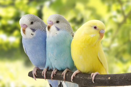 조류 관리의 기본: 앵무새 돌보는 방법