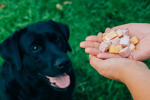 먹이-기다리는-강아지