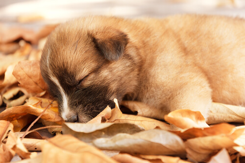 수면 유형에 따른 반려견의 성격