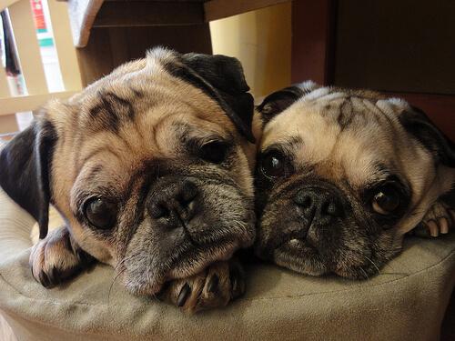 우리 개는 왜 코를 고는 걸까?
