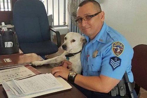 길 잃은 개가 경찰관이 되다