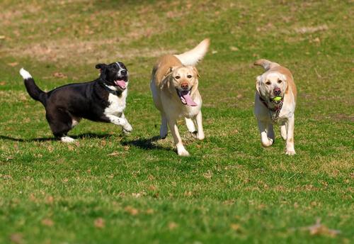 강아지의 사회화